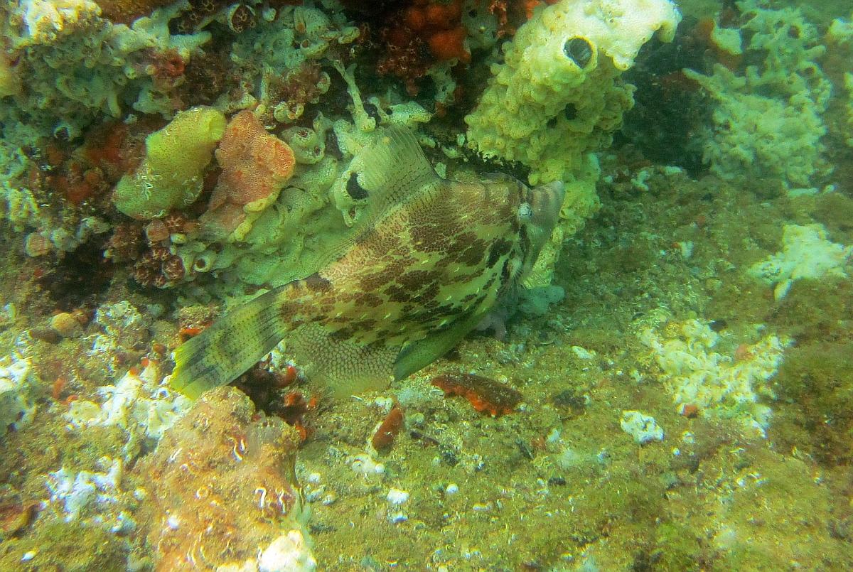Sunday Dive: 21-04-2013 Rockingham - Orient Mako Rockingham%20grain%20teminal%2021-04-2013%20fish%202