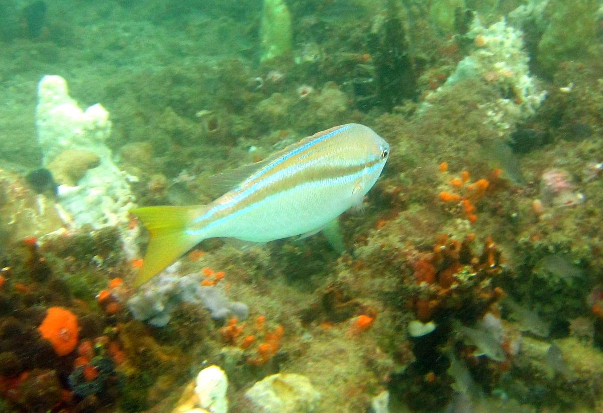 Sunday Dive: 21-04-2013 Rockingham - Orient Mako Rockingham%20grain%20teminal%2021-04-2013%20fish%203