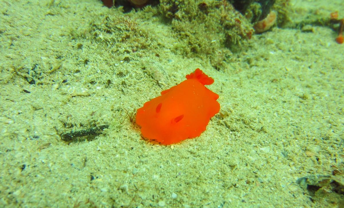 Sunday Dive: 21-04-2013 Rockingham - Orient Mako Rockingham%20grain%20teminal%2021-04-2013%20nudibranch%202