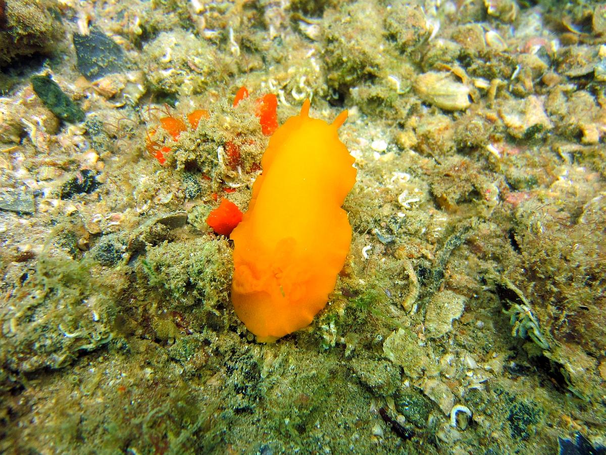 Sunday Dive: 21-04-2013 Rockingham - Orient Mako Rockingham%20grain%20teminal%2021-04-2013%20nudibranch%203