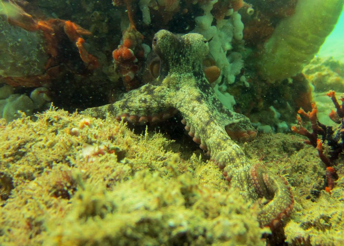 Sunday Dive: 21-04-2013 Rockingham - Orient Mako Rockingham%20grain%20teminal%2021-04-2013%20octopus%205