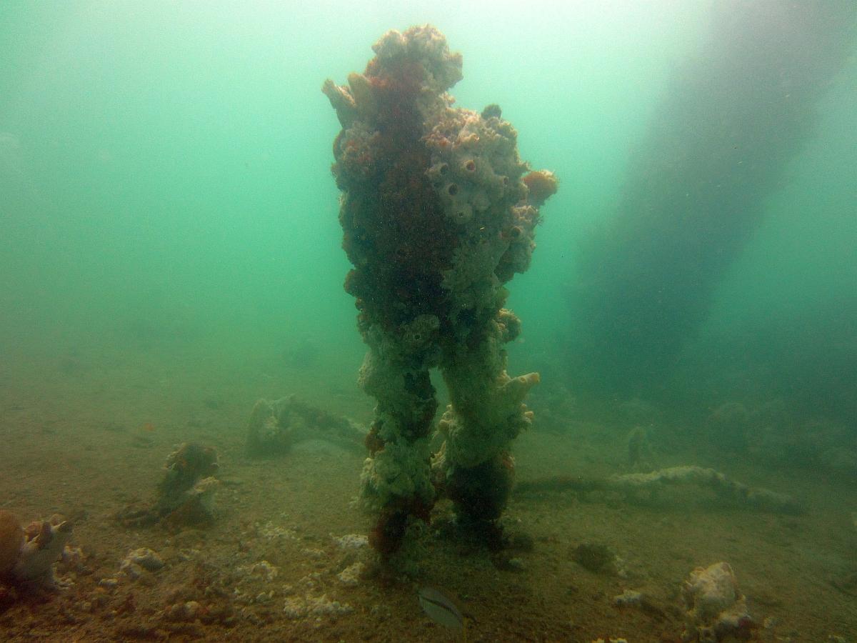 Sunday Dive: 21-04-2013 Rockingham - Orient Mako Rockingham%20grain%20teminal%2021-04-2013%20sea-bear%200