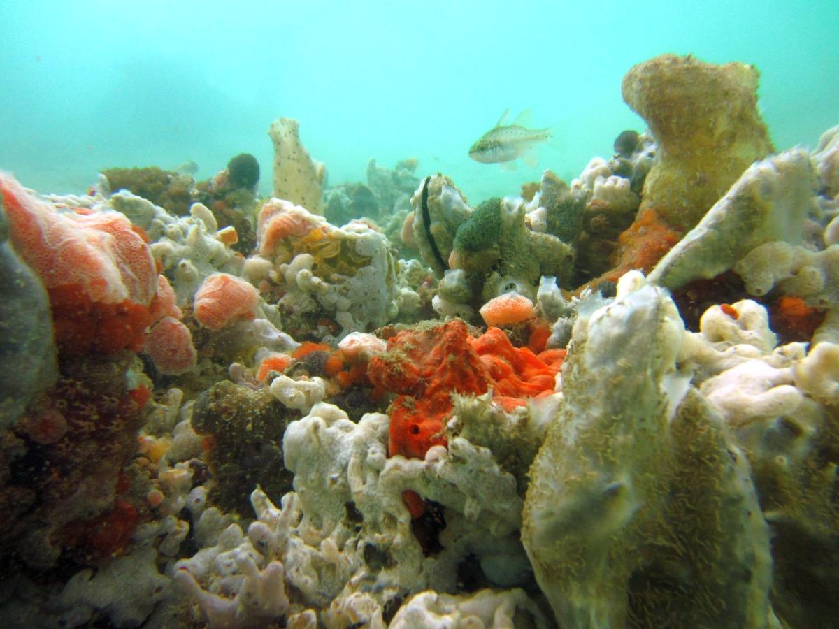 Sunday Dive: 21-04-2013 Rockingham - Orient Mako Rockingham%20grain%20teminal%2021-04-2013%20sponges%204