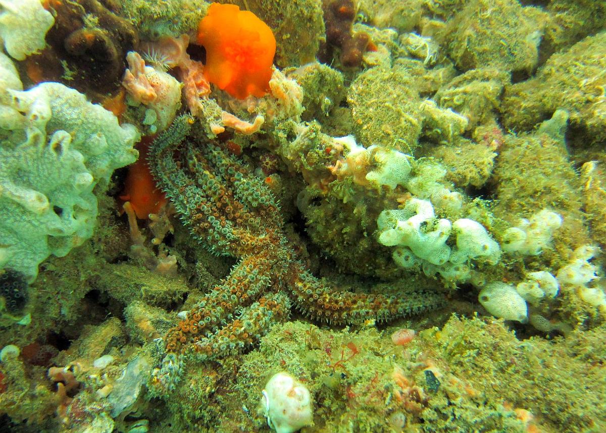 Sunday Dive: 21-04-2013 Rockingham - Orient Mako Rockingham%20grain%20teminal%2021-04-2013%20starfish%203