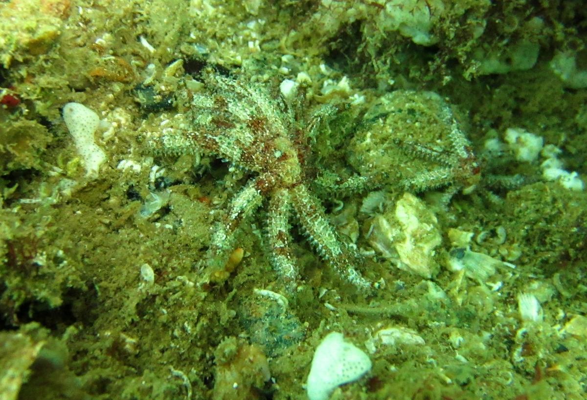 Sunday Dive: 21-04-2013 Rockingham - Orient Mako Rockingham%20grain%20teminal%2021-04-2013%20starfish%204