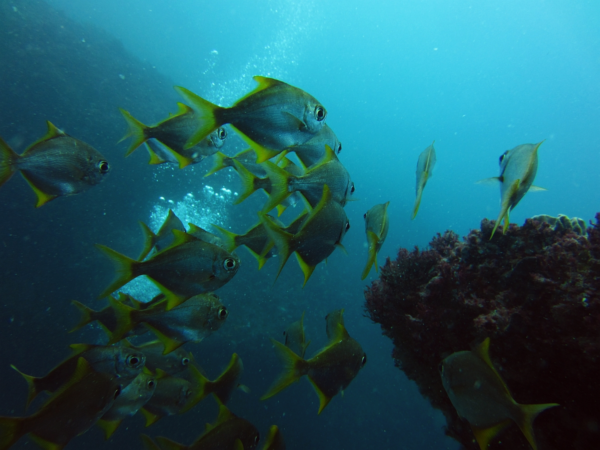 Sunday Dive: 05-05-2013 Roes Reef - OS300 Roes%20Reef%205-5-1013%20%20fish%201