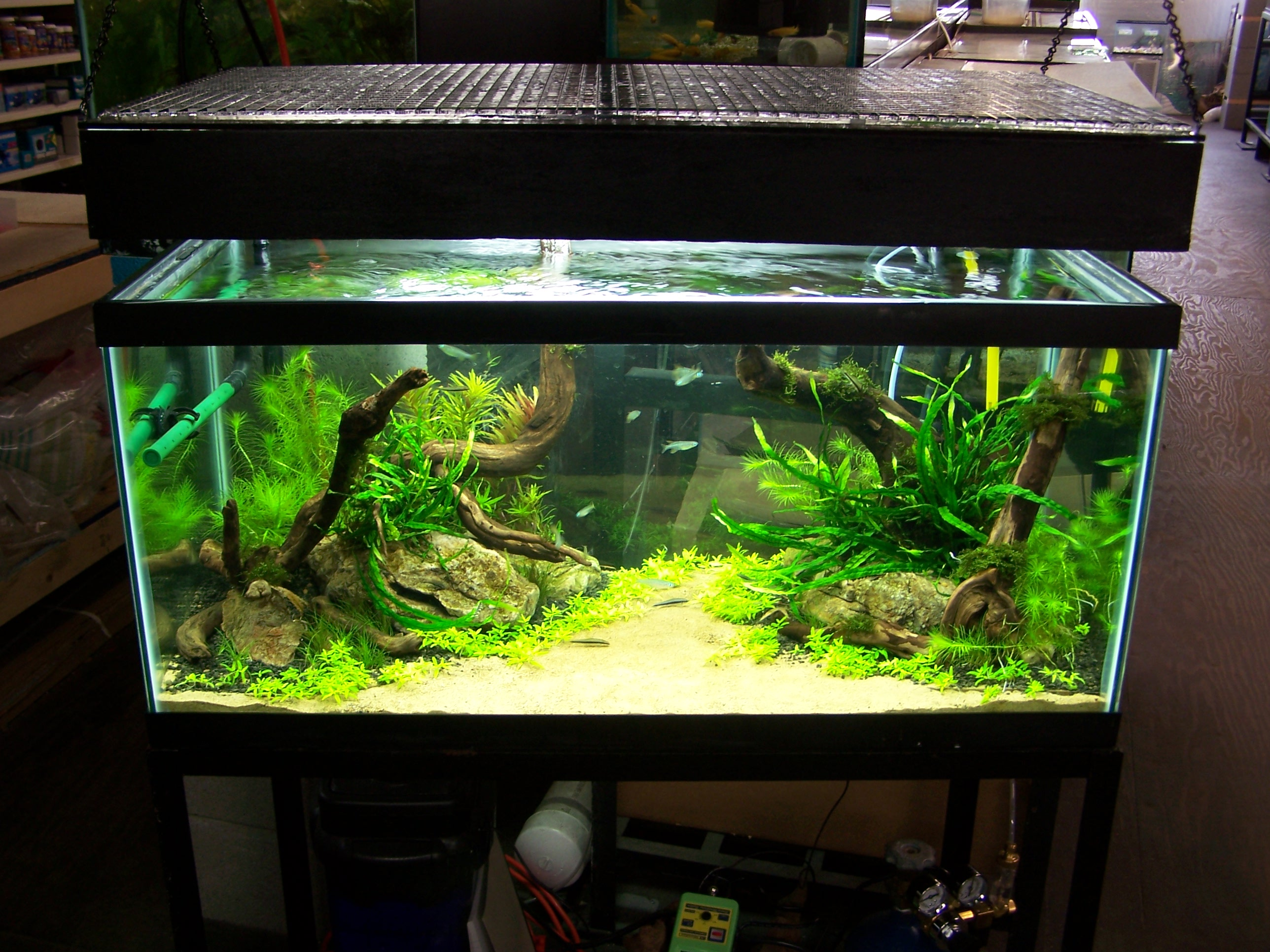 30L aquascaping - Page 2 5-6_front