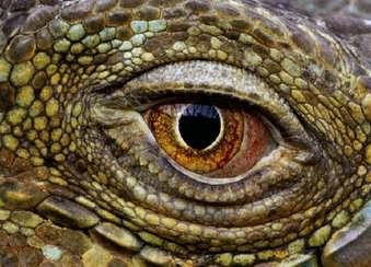L'œil qui voit tout; tous les symboles des Illuminatis dans les médias Naq9cwu0