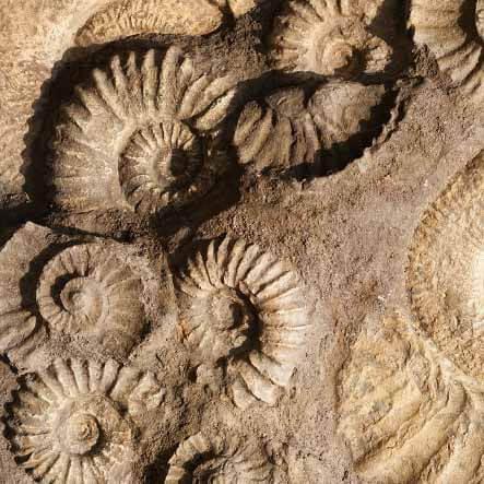 Fosili - Page 6 Fossils