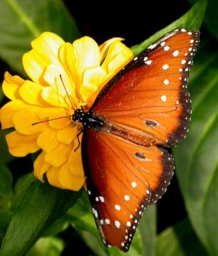 Doživljaj svijeta oko nas Butterfly_watching