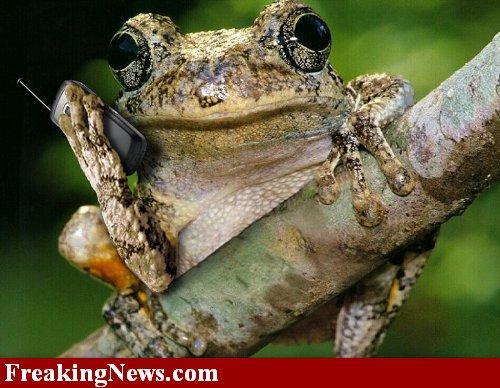 SABATO 10 AGOSTO, SALUTIAMOCI IN QUESTA SEZIONE 23275-Frog-Cell-Phone_w