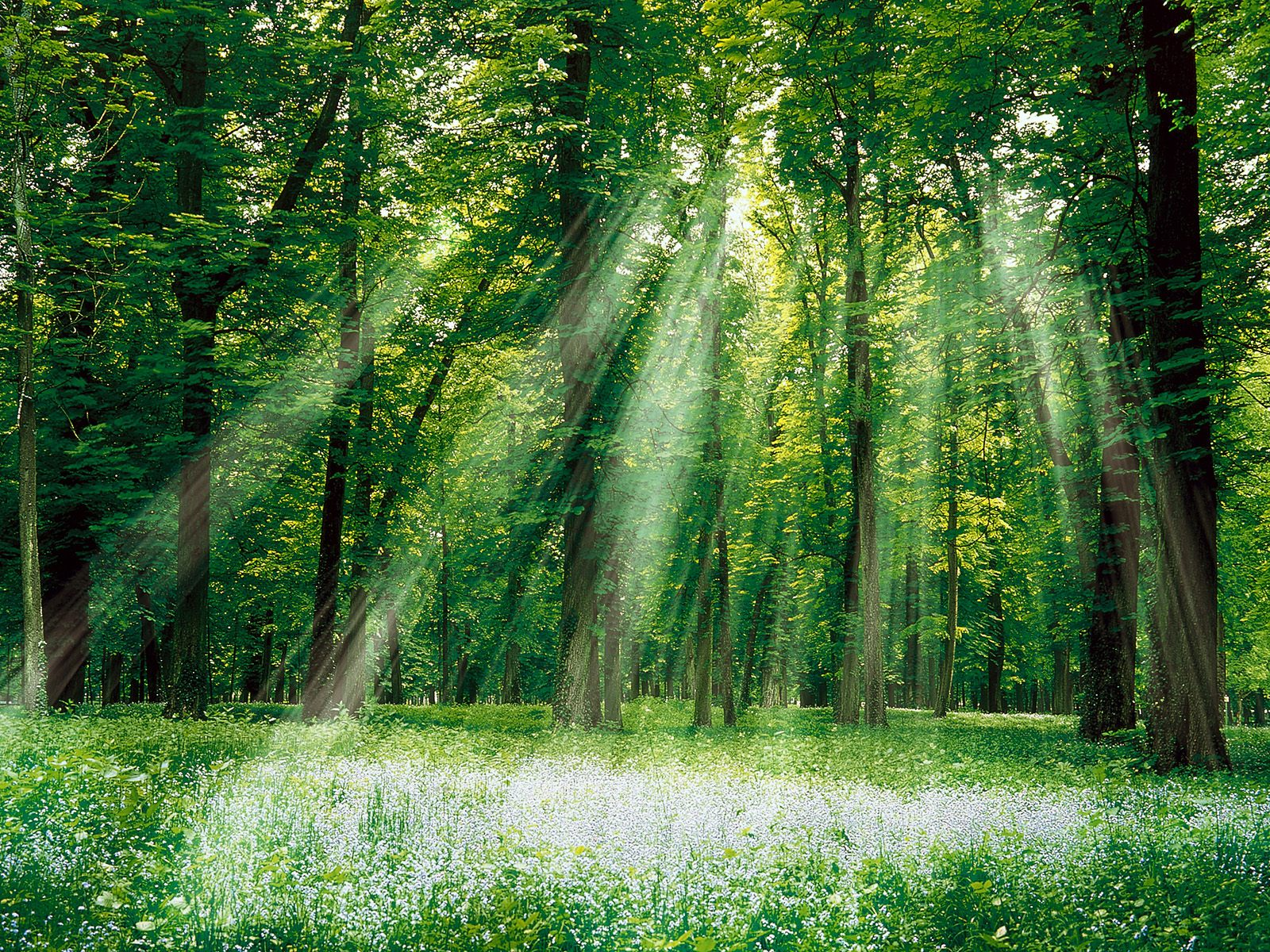 I TRE CEDRI (una storia da raccontare). Forest3