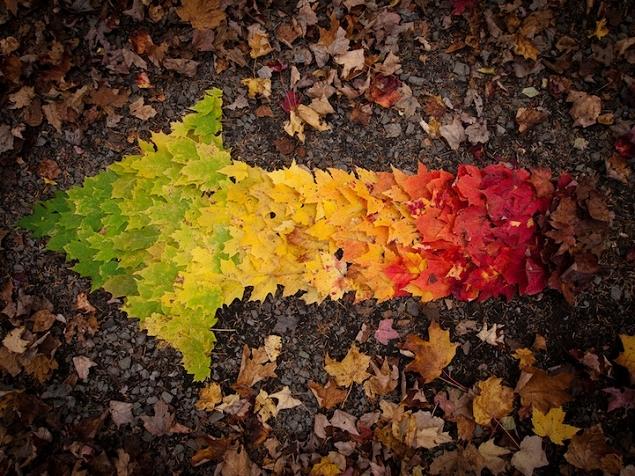 A l'Esperluette. - Page 10 Autumn-leaves-rainbow