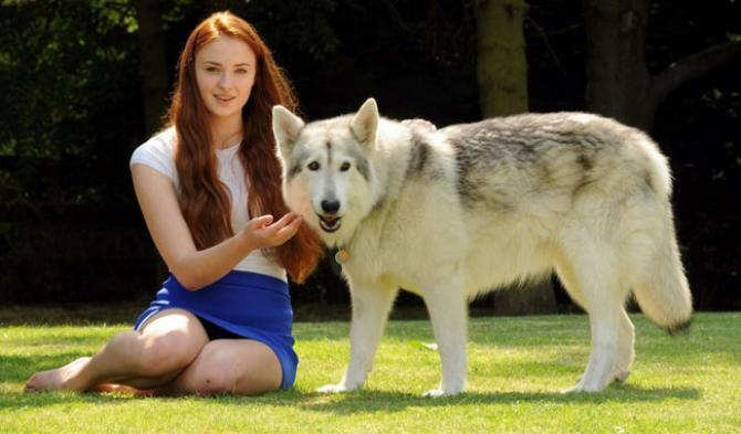 American/European Wolfdog: chien-loup américains et européens et autres hybrides - Page 3 Crop_visu_1402562583