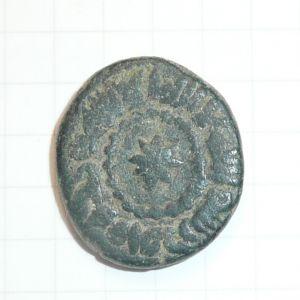 Felus Frochoso XVII-C 573562265