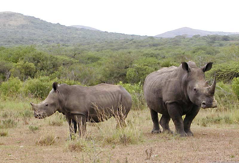 هل تعلم:موضوع مميز Rhino26