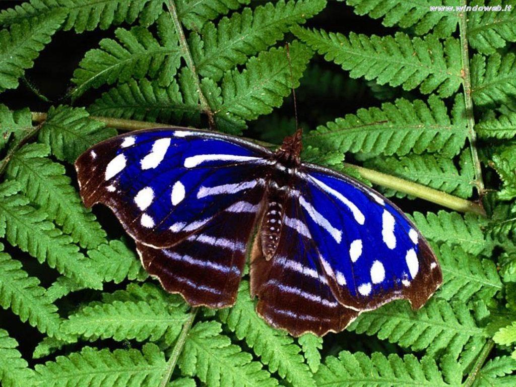 Gara immagini dal 14 al 19 Novembre Foto_farfalle_02