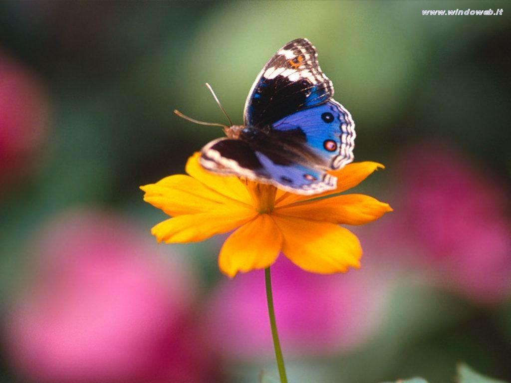 Gara immagini dal 14 al 19 Novembre Foto_farfalle_07