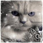 Новогодние аватарки - Страница 4 14