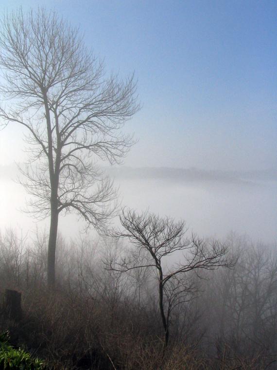 Kroz maglu...  - Page 2 Fog