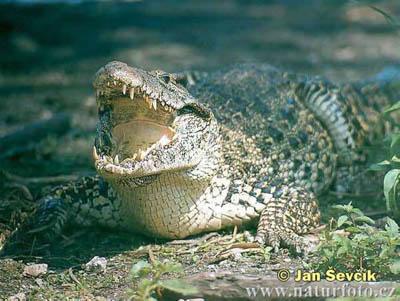 10 loài động vật quý hiếm nguy cấp 2010 090410_TNTN_Dongvatquyhiemnguycap2010