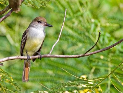 10 loài động vật quý hiếm nguy cấp 2010 090410_TNTN_Dongvatquyhiemnguycap2010bocau