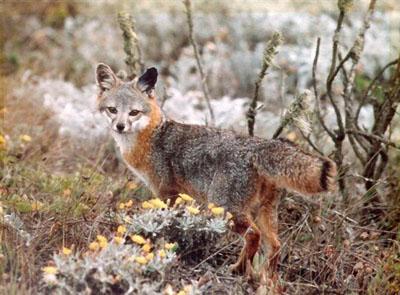 10 loài động vật quý hiếm nguy cấp 2010 090410_TNTN_Dongvatquyhiemnguycap2010cao
