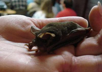 10 loài động vật quý hiếm nguy cấp 2010 090410_TNTN_Dongvatquyhiemnguycap2010doi