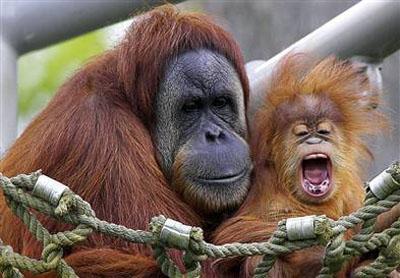 10 loài động vật quý hiếm nguy cấp 2010 090410_TNTN_Dongvatquyhiemnguycap2010duoiuoi