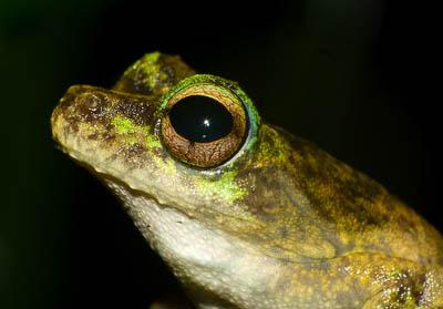 10 loài động vật quý hiếm nguy cấp 2010 090410_TNTN_Dongvatquyhiemnguycap2010ech