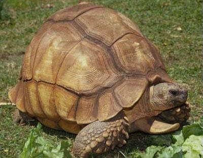 10 loài động vật quý hiếm nguy cấp 2010 090410_TNTN_Dongvatquyhiemnguycap2010rua