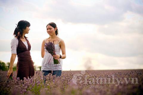 Biêng biếc sắc tím mùa hoa Lavender 020411afamilyDLhoa1