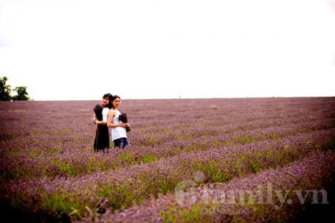 Biêng biếc sắc tím mùa hoa Lavender 020411afamilyDLhoa2