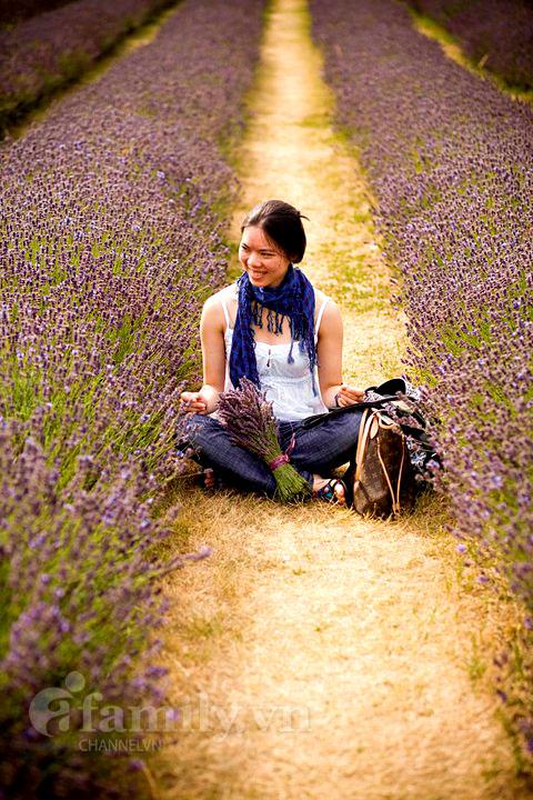 Biêng biếc sắc tím mùa hoa Lavender 020411afamilyDLhoa3