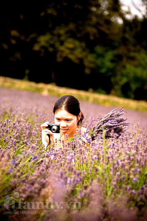 Biêng biếc sắc tím mùa hoa Lavender 020411afamilyDLhoa6