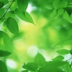عادات بسيطة تساعد على حماية البيئة Green-tips-gifts-lg-150x150