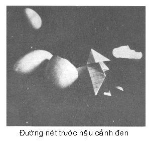 Đường nét trong bố cục ảnh P0602a
