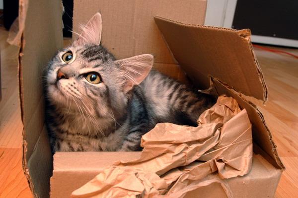 Gattilicious  =^.^= Kitten_box_cardboard_play_cat