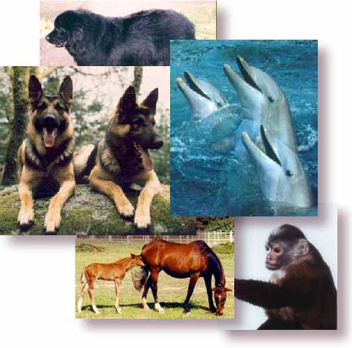 Les animaux ont aussi des droits! Animaux
