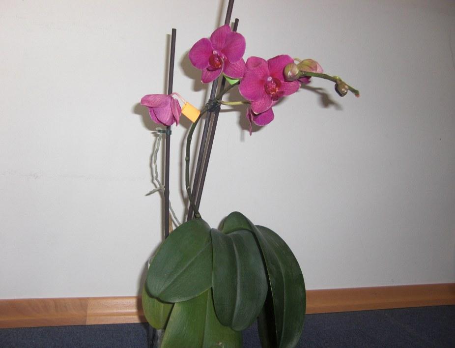 Erste Fragen zur Züchtung und zu neuen Pflanzen 85bdef967c