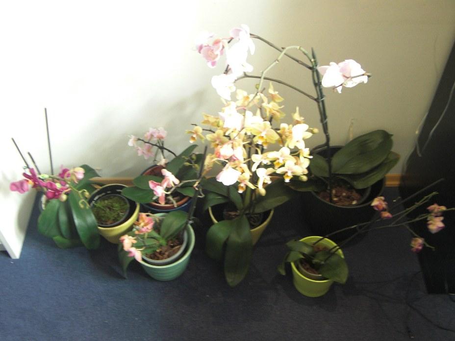 Erste Fragen zur Züchtung und zu neuen Pflanzen 948f44eba6