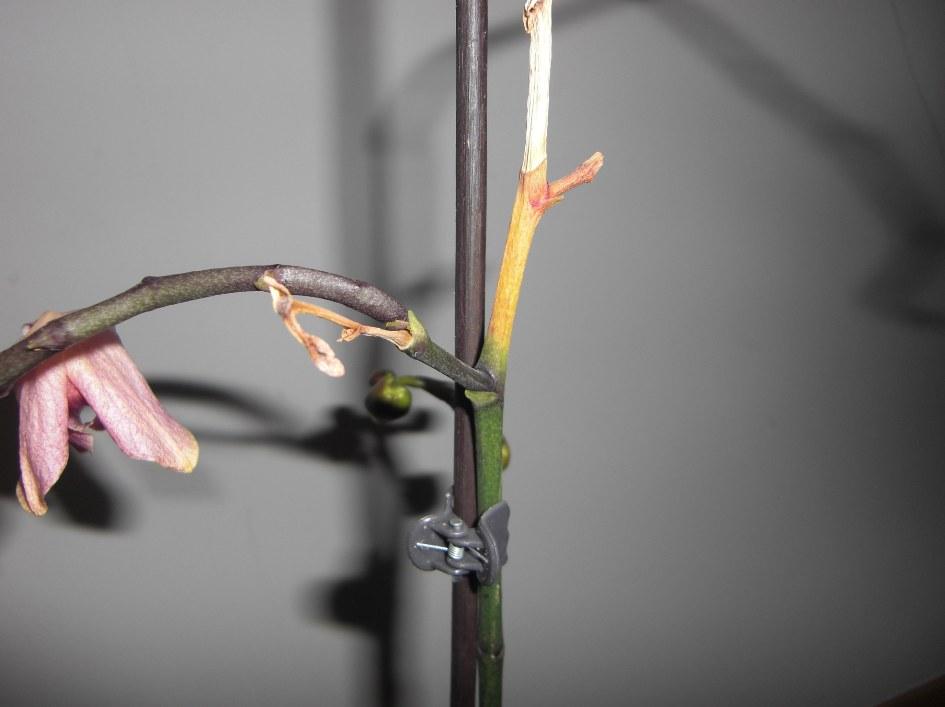 Erste Fragen zur Züchtung und zu neuen Pflanzen 987f44e596