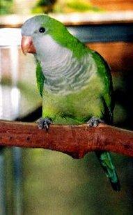 Mis liiki papagoi oled sina? (Test) Quiz868outcome1