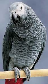 Mis liiki papagoi oled sina? (Test) Quiz868outcome2