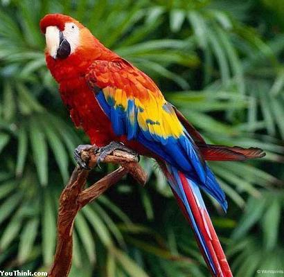 Mis liiki papagoi oled sina? (Test) Quiz868outcome3