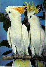 Mis liiki papagoi oled sina? (Test) Quiz868outcome5