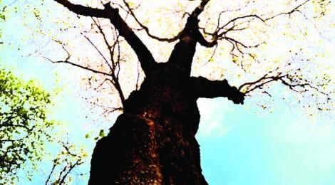 [Tregim islam] Pema e rapit Rrapi-470x260