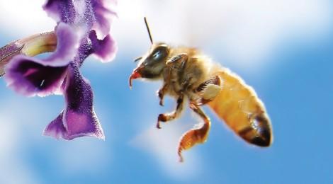 Studime Bee-470x260
