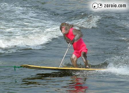 MESA unica do Zaroio  com animais em atitudes comicas 20050315022437