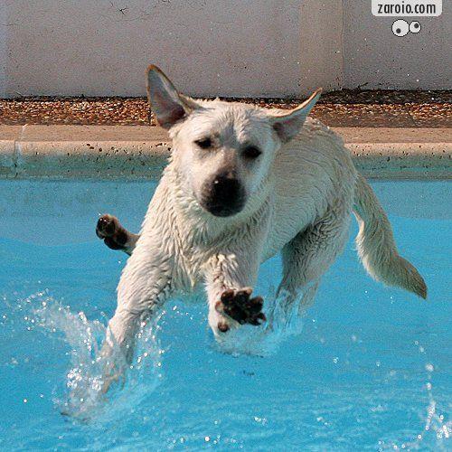 MESA unica do Zaroio  com animais em atitudes comicas 200910010340443